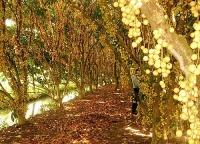 5 vườn cây ăn trái giúp bạn thư giãn mùa hè