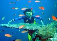 Đà Nẵng: Sôi động không gian trên cạn và dưới nước